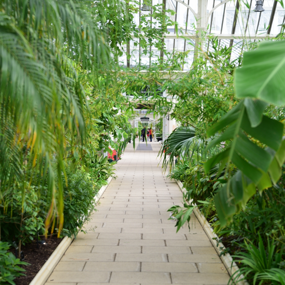 The Temperate House Kew  10 Arthur Road Landscapes.jpg