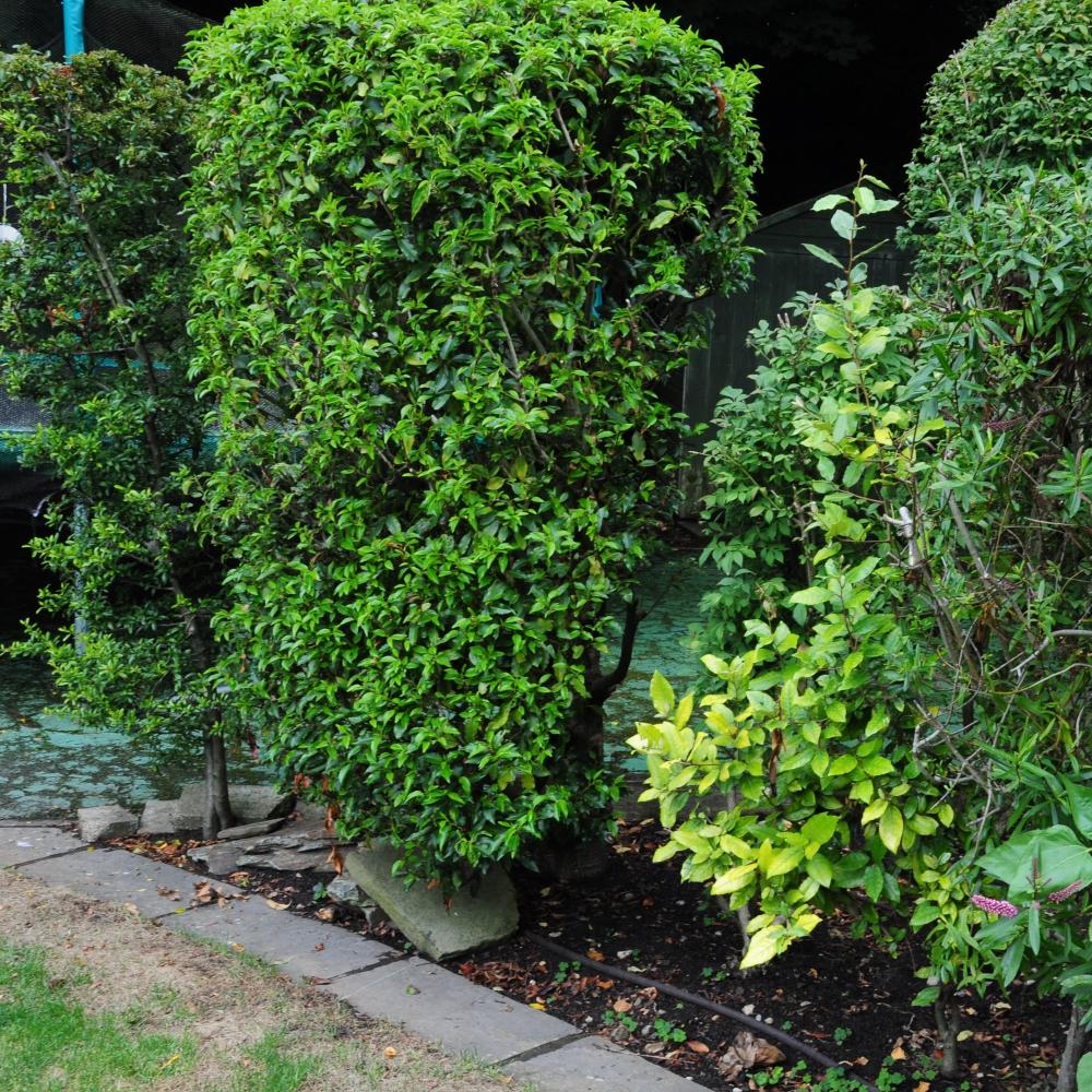 Wimbledon planting 16 Arthur Road Landscapes.jpg
