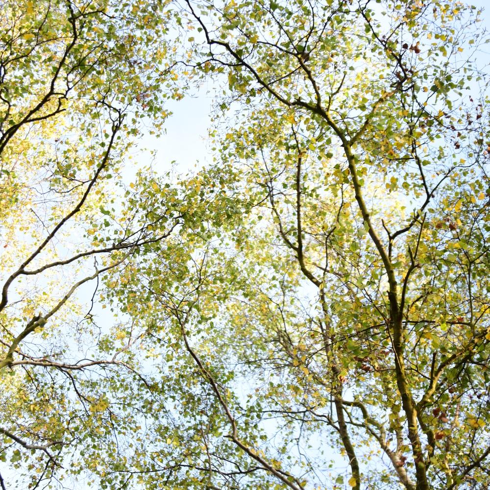 Fading foliage Arthur Road Landscapes.jpg