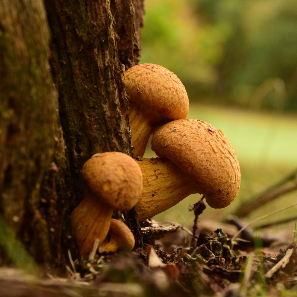 Fungi Arthur Road Landscapes.jpg