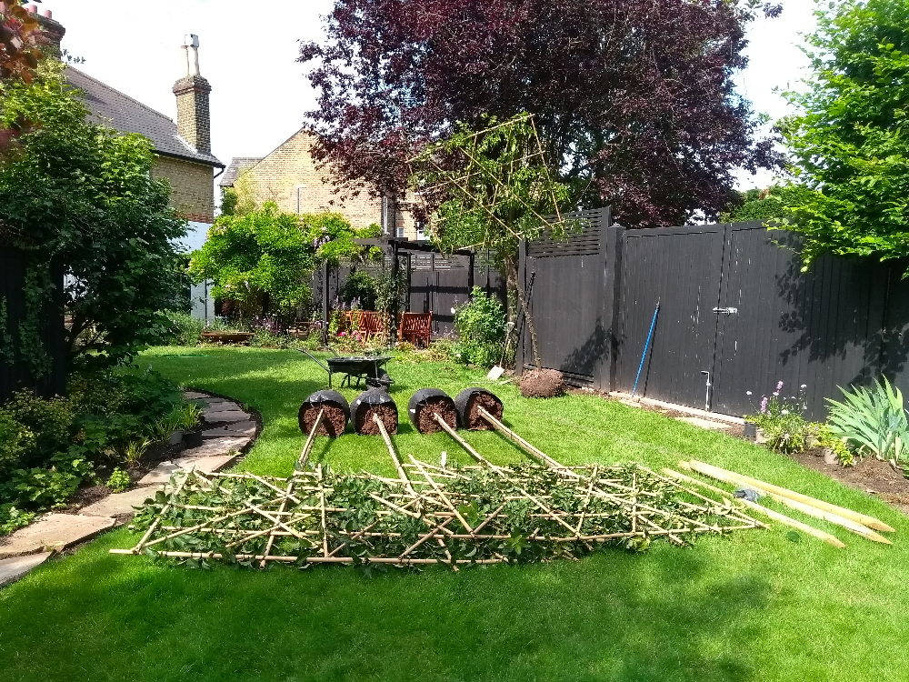 Teddington garden revamp pleached trees Arthur Road Landscapes.jpg