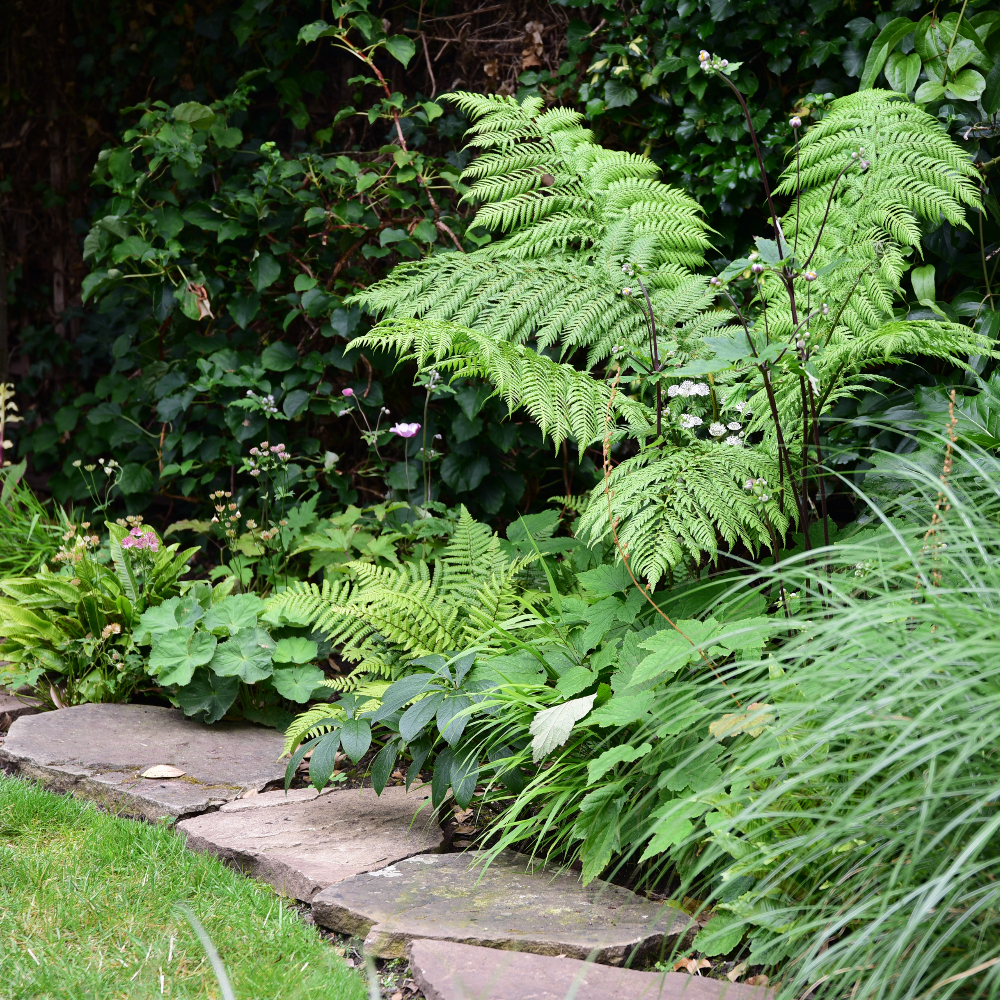 Tedding garden revamp tree fern Arthur Road Landscapes.jpg