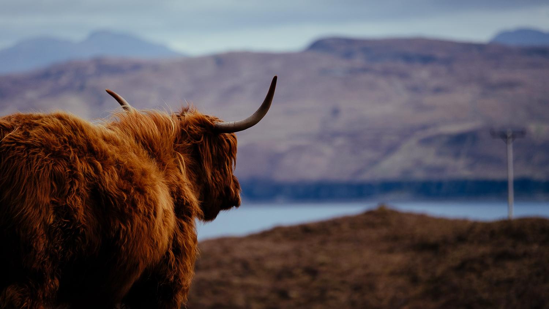 Scotland - Isle of Skye - Elgol