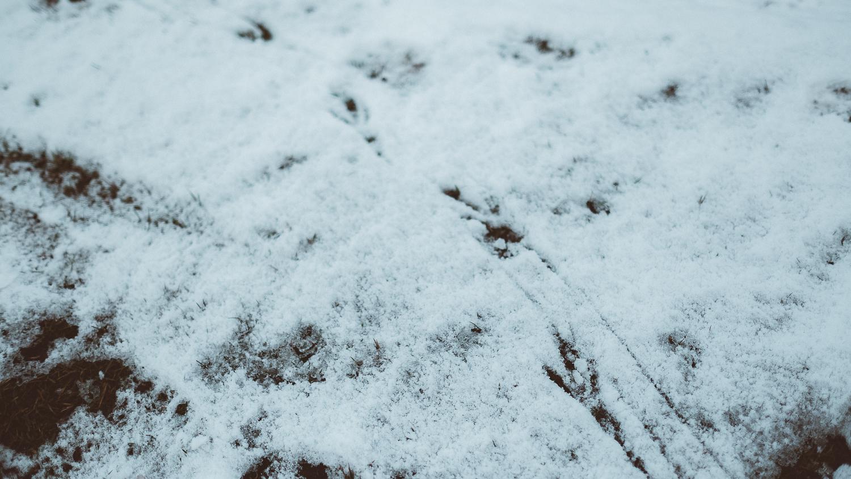 0006-photography-trekking-snow-20171125124953.jpg