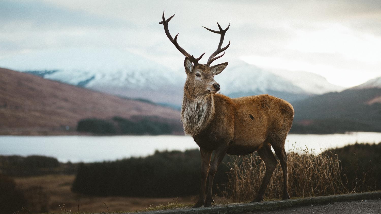 Scotland-Argyll-Glencoe-E-City