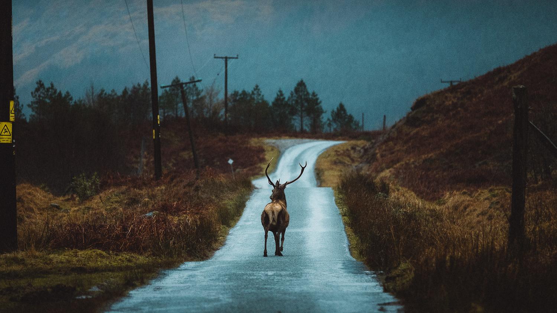 Scotland-Argyllshire-Road Trip Glencoe Eric