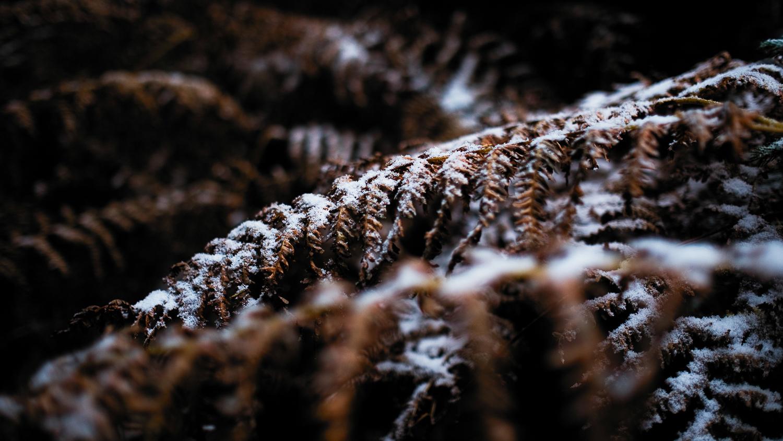 0001-winter-photography-auvergne-20171106103808.jpg