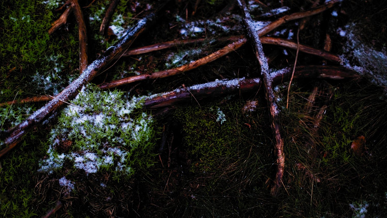 0004-winter-photography-auvergne-20171106105244.jpg