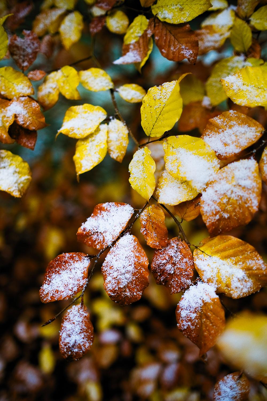 0005-winter-photography-auvergne-20171106105402.jpg
