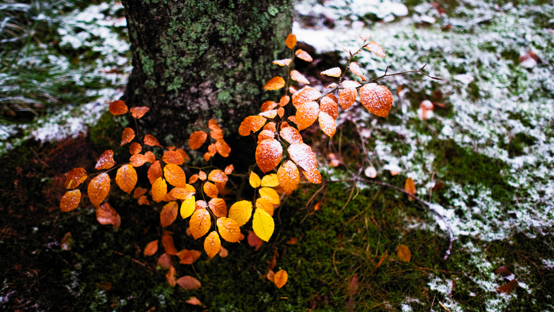 0010-winter-photography-auvergne-20171106115903.jpg