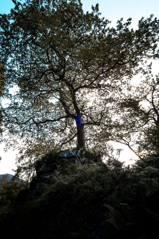 Scotland-Trossach-Prime Rose Hill