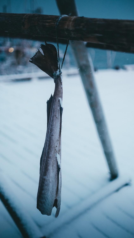 0088-hiver-norvege-20190301173942-compress.jpg