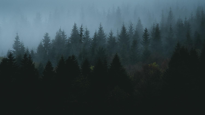 0005-vosges-paysage-nature-20190428182622-compress.jpg