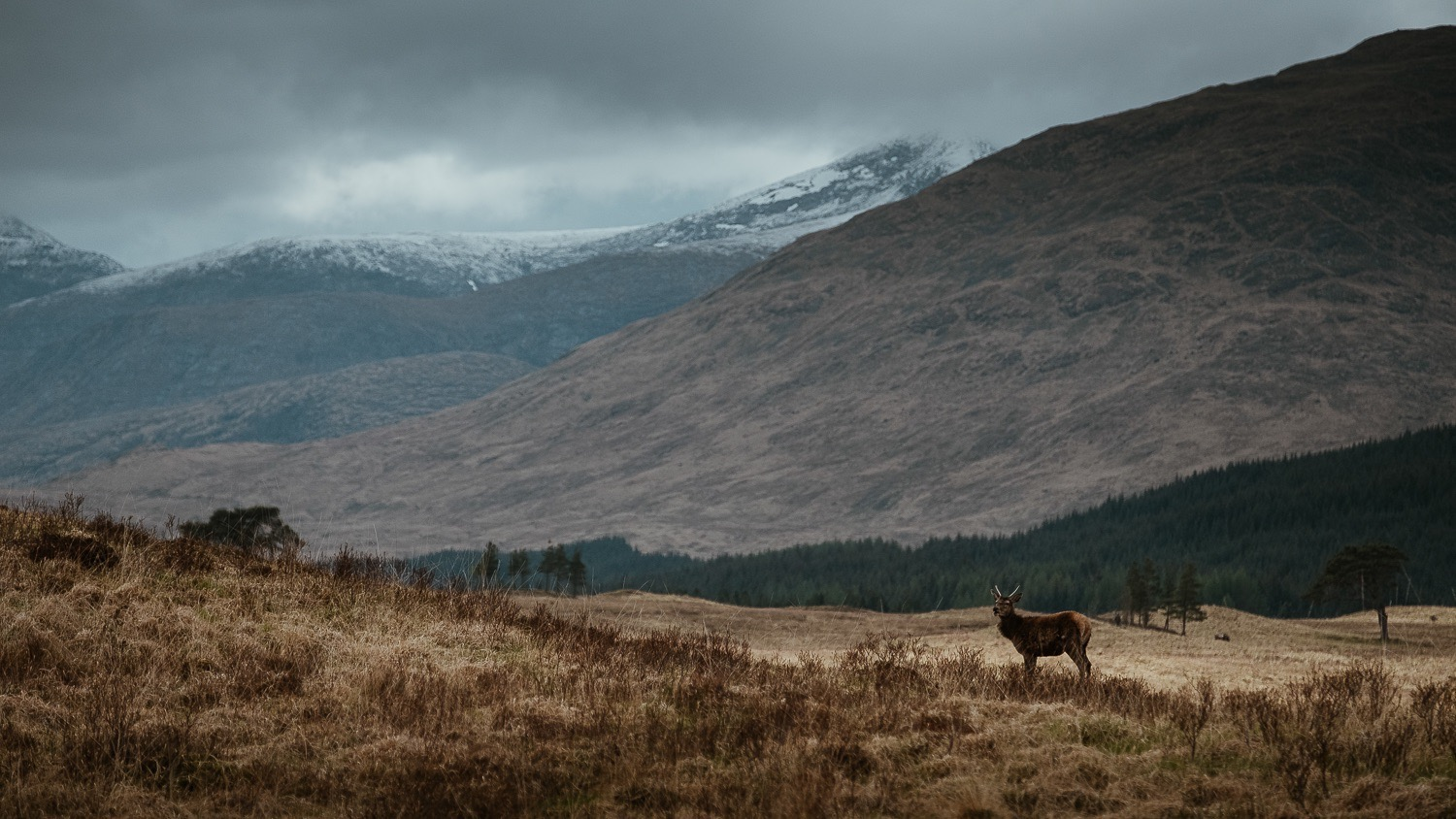 0010-scotland-tamron-le monde de la photo-paysage-20190507165357-compress.jpg