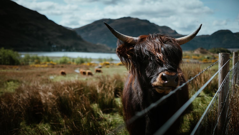 0041-scotland-tamron-le monde de la photo-paysage-20190509132614-compress.jpg
