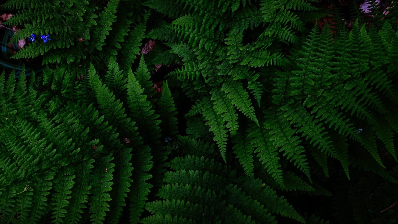 0049-scotland-tamron-le monde de la photo-paysage-20190509190017-compress.jpg