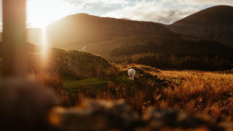 0071-scotland-tamron-le monde de la photo-paysage-20190510204807-compress.jpg