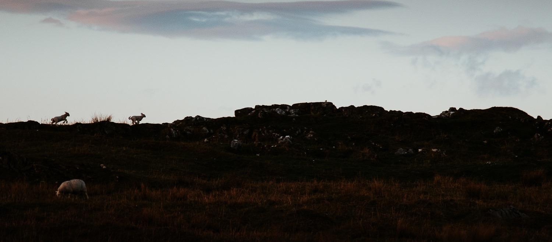 0073-scotland-tamron-le monde de la photo-paysage-20190510212616-compress.jpg
