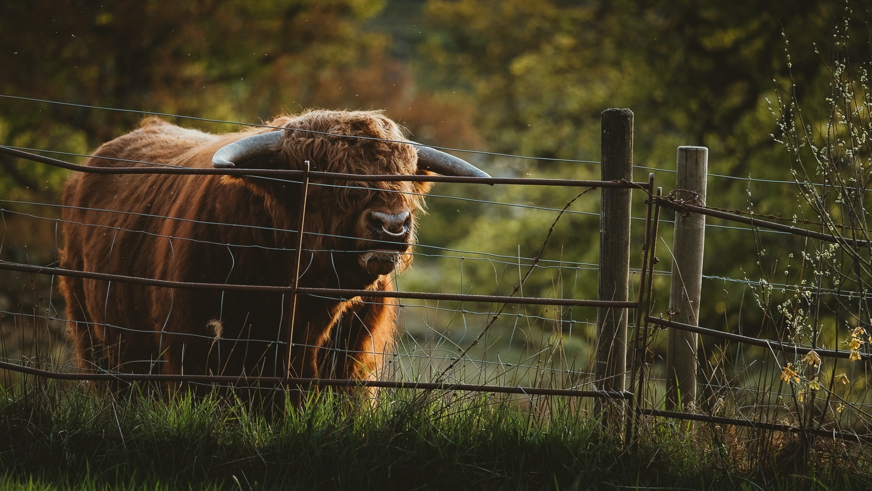 0109-scotland-tamron-le monde de la photo-paysage-20190512204055-compress.jpg