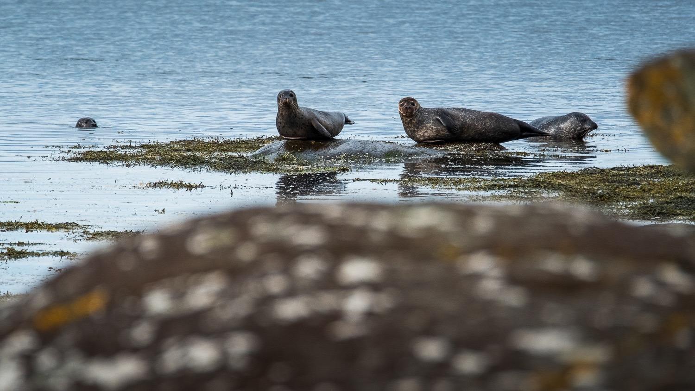 0115-scotland-tamron-le monde de la photo-paysage-20190513095756-compress.jpg
