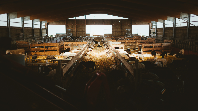 0005-reportage photo-ferme-fromage-la caprovine-20180814172428.jpg
