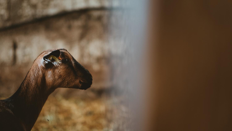 0024-reportage photo-ferme-fromage-la caprovine-20180817073454.jpg