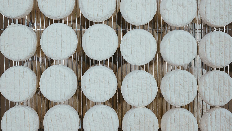 0029-reportage photo-ferme-fromage-la caprovine-20180815165129.jpg