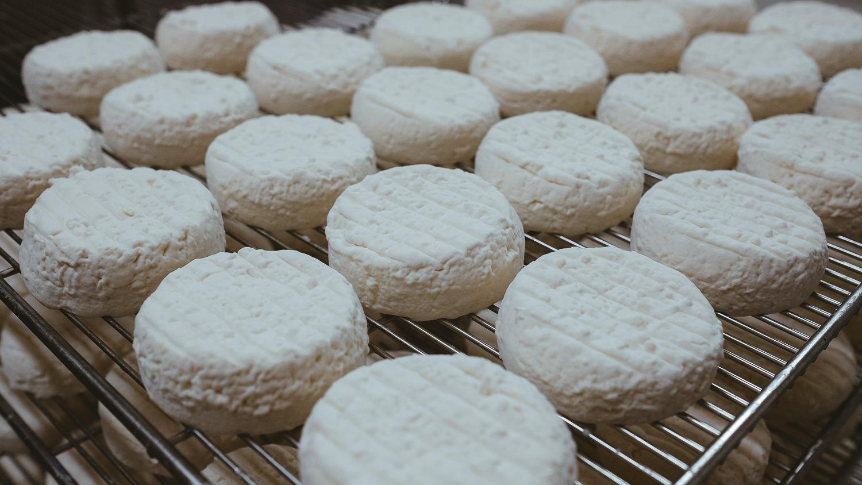 0030-reportage photo-ferme-fromage-la caprovine-20180815165151.jpg