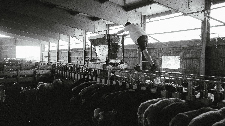 0044-reportage photo-ferme-fromage-la caprovine-20180819073735.jpg