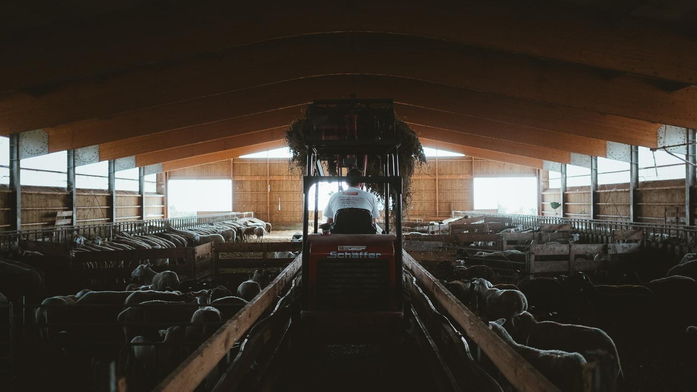0047-reportage photo-ferme-fromage-la caprovine-20180819075835.jpg