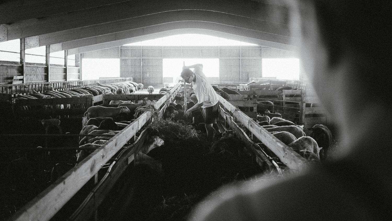 0049-reportage photo-ferme-fromage-la caprovine-20180819080109.jpg