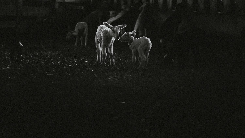 0050-reportage photo-ferme-fromage-la caprovine-20180819080143.jpg