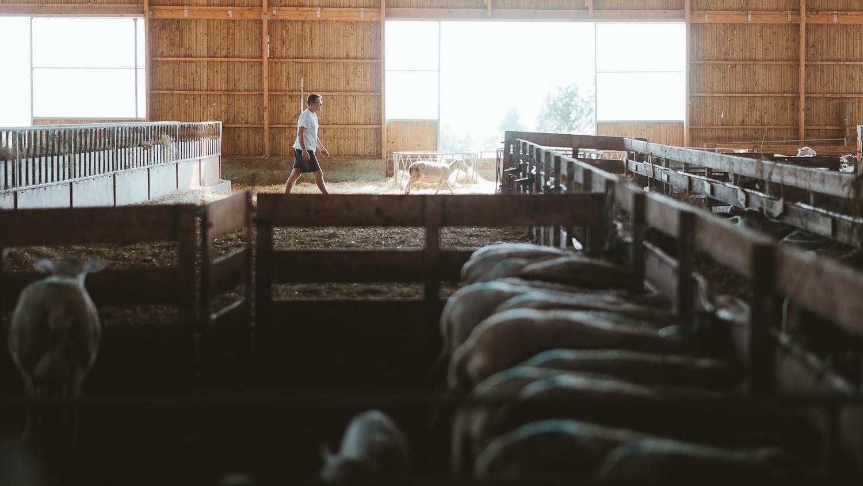 0051-reportage photo-ferme-fromage-la caprovine-20180819080520.jpg