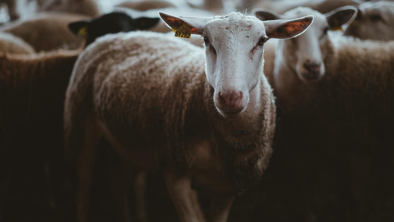 0054-reportage photo-ferme-fromage-la caprovine-20180819080914.jpg