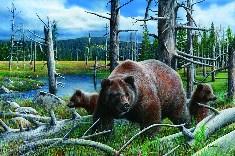 New Discoveries by Kevin Daniel Art Print Bear Wildlife Cubs Poster 11x14