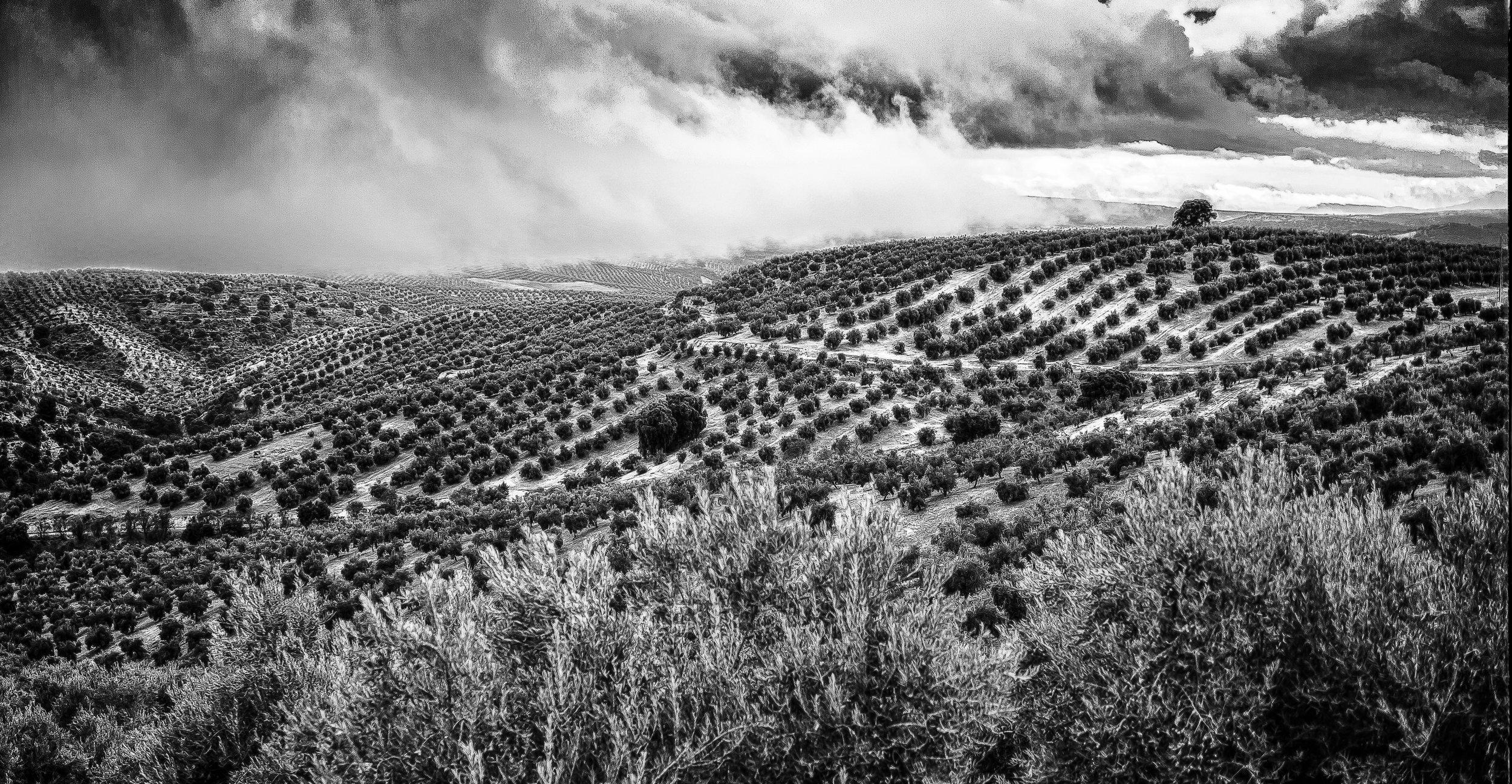 Passing Storm, Olive Fields ~ Jaen Spain