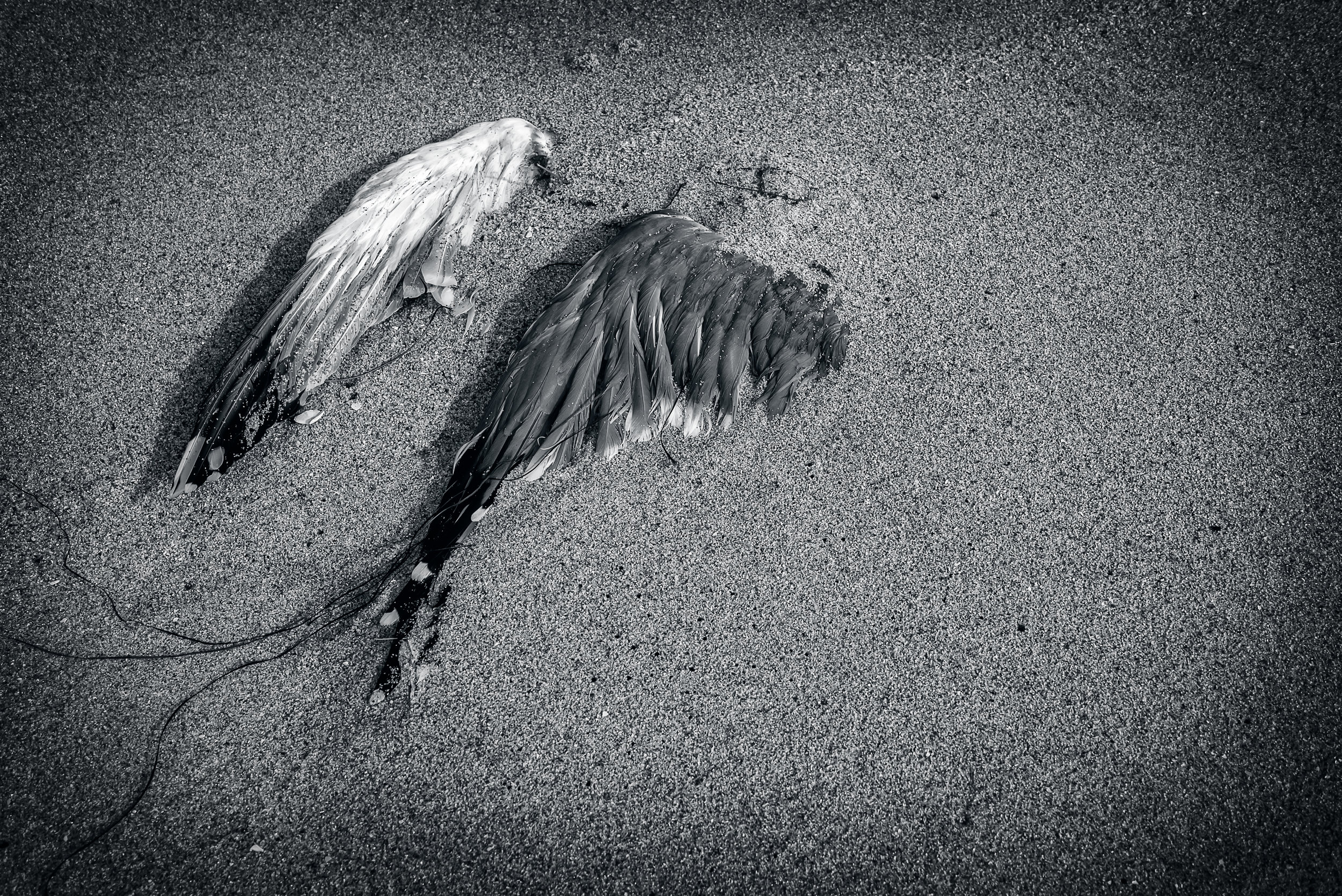 """Broken Wings"" ~ Davenport, CA 2014"