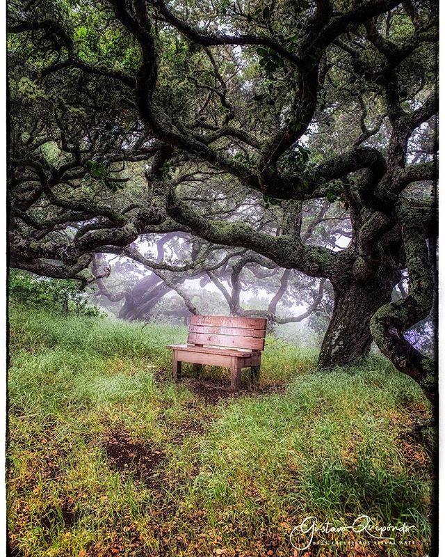 """𝔻𝕣𝕖𝕒𝕞𝕤𝕔𝕒𝕡𝕖 𝕥𝕣𝕒𝕚𝕝 𝕣𝕦𝕟 𝕗𝕚𝕟𝕕𝕤""~ℝ𝕒𝕟𝕕𝕠𝕞 𝕃𝕒𝕟𝕕𝕤𝕔𝕒𝕡𝕖 𝕎𝕒𝕟𝕕𝕖𝕣𝕚𝕟𝕘𝕤... ****************************************************** #dreamscapes #instanature #naturalworld #centralcoast #californiacoast #landscapephotography #shotoniphone #iphoneography #iphoneographer #iphonexsmax #whatyoufindrunninginthemountains #trailruns #californiacountry #lososos"