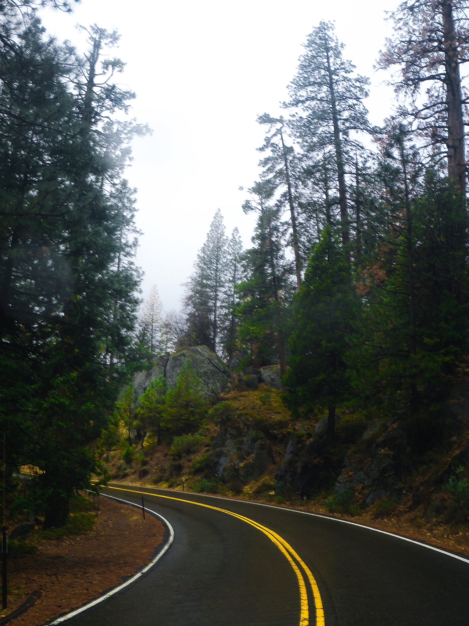 Curved road YNP FINAL.jpg