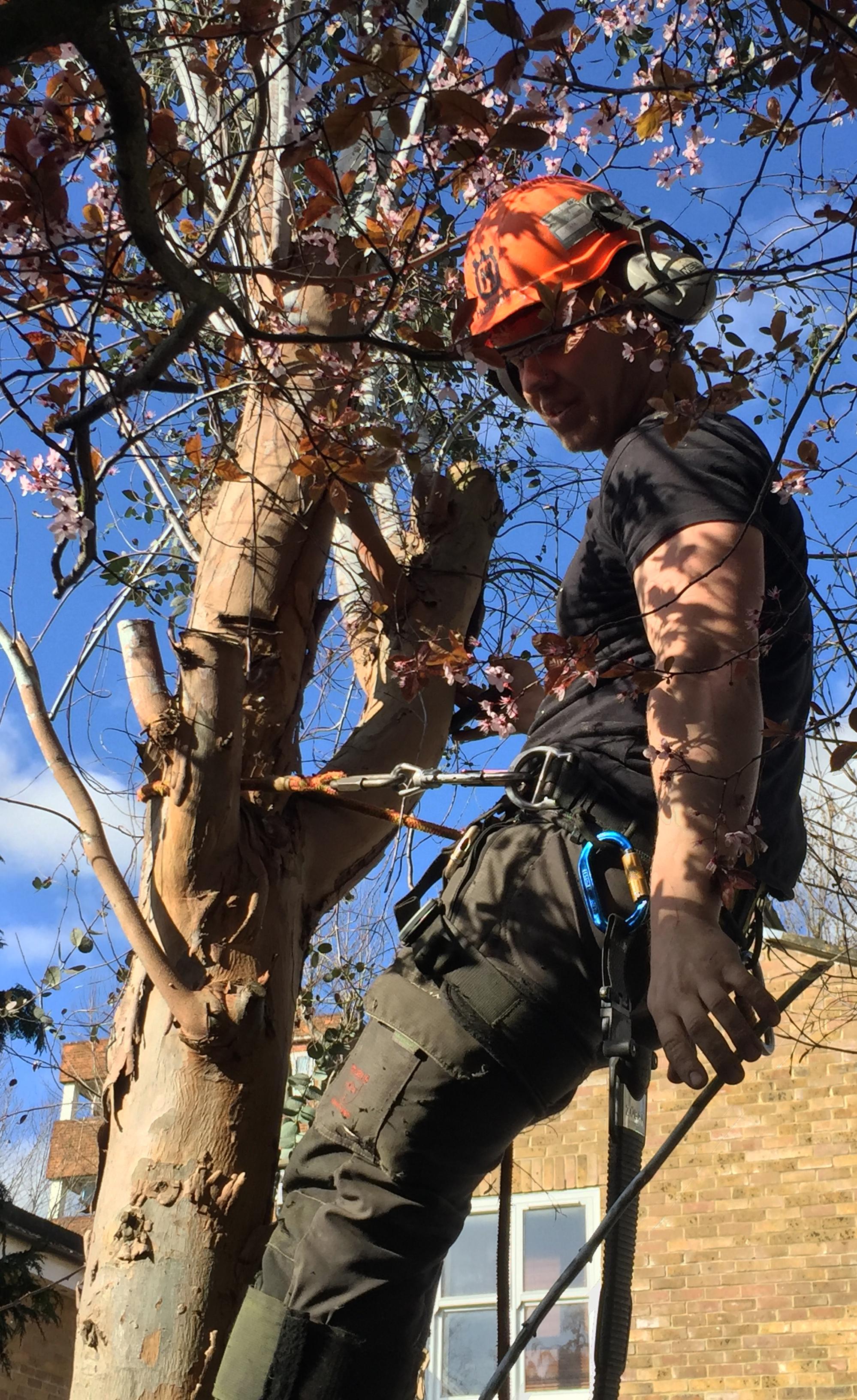 Tree work & pruning 2.JPG