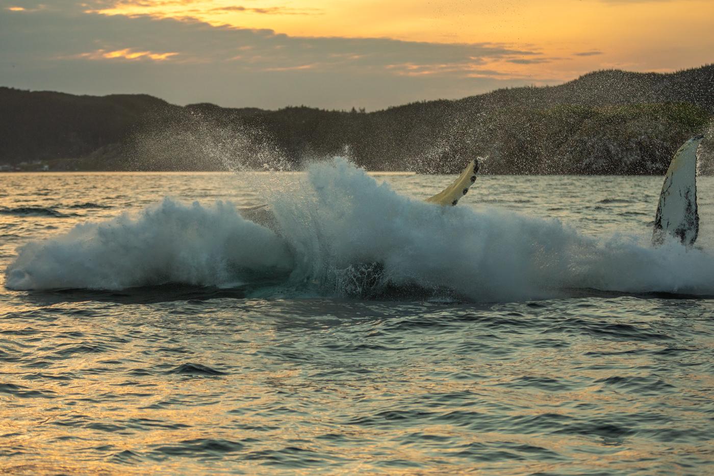 Humpback-Whale-Breach-Four.jpg