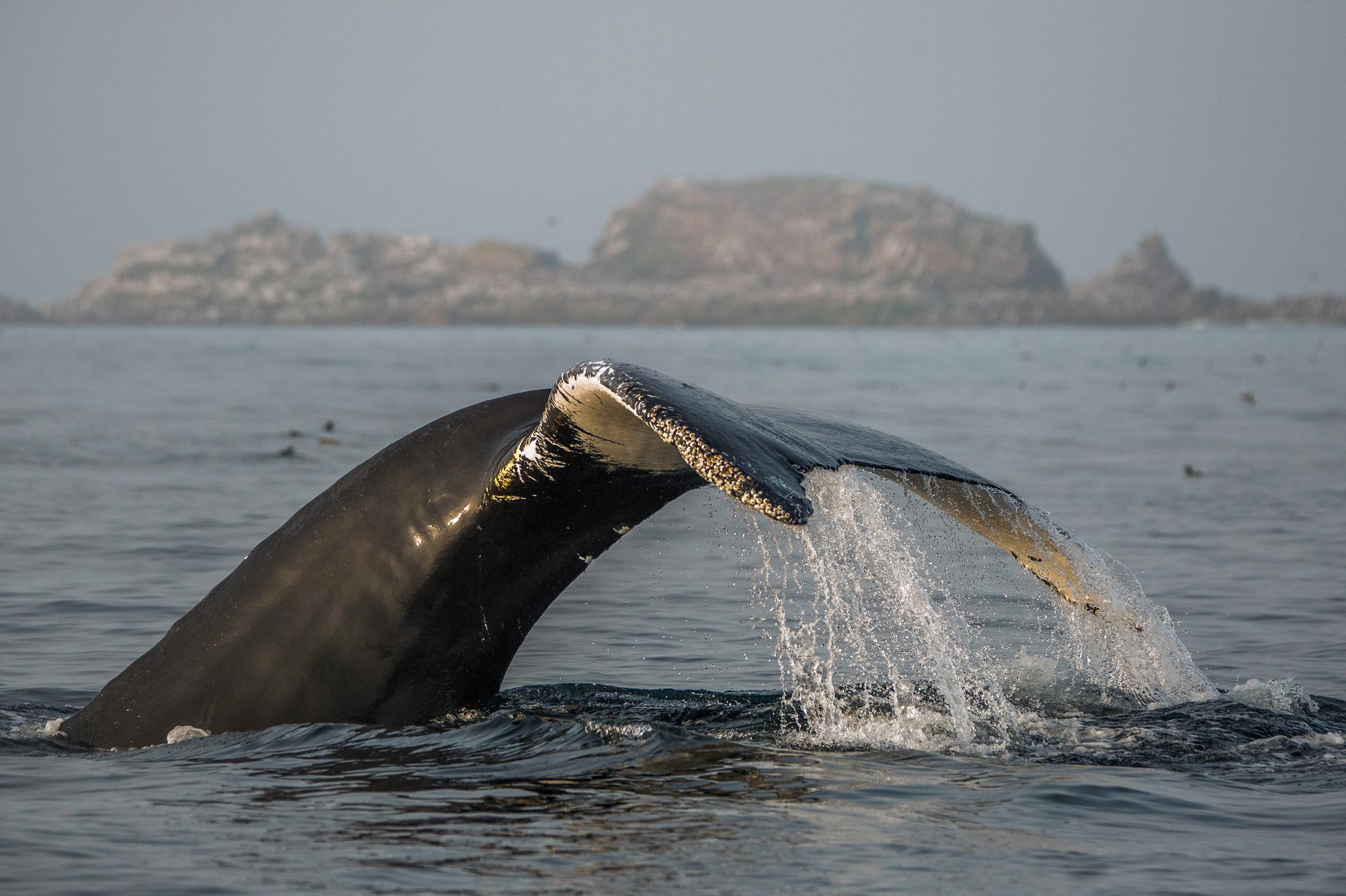 Whale-Tale.jpg