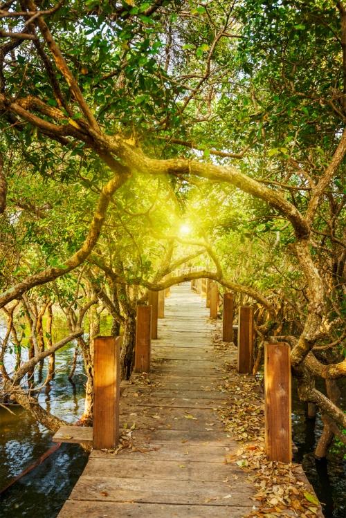 Path to Balaned Life