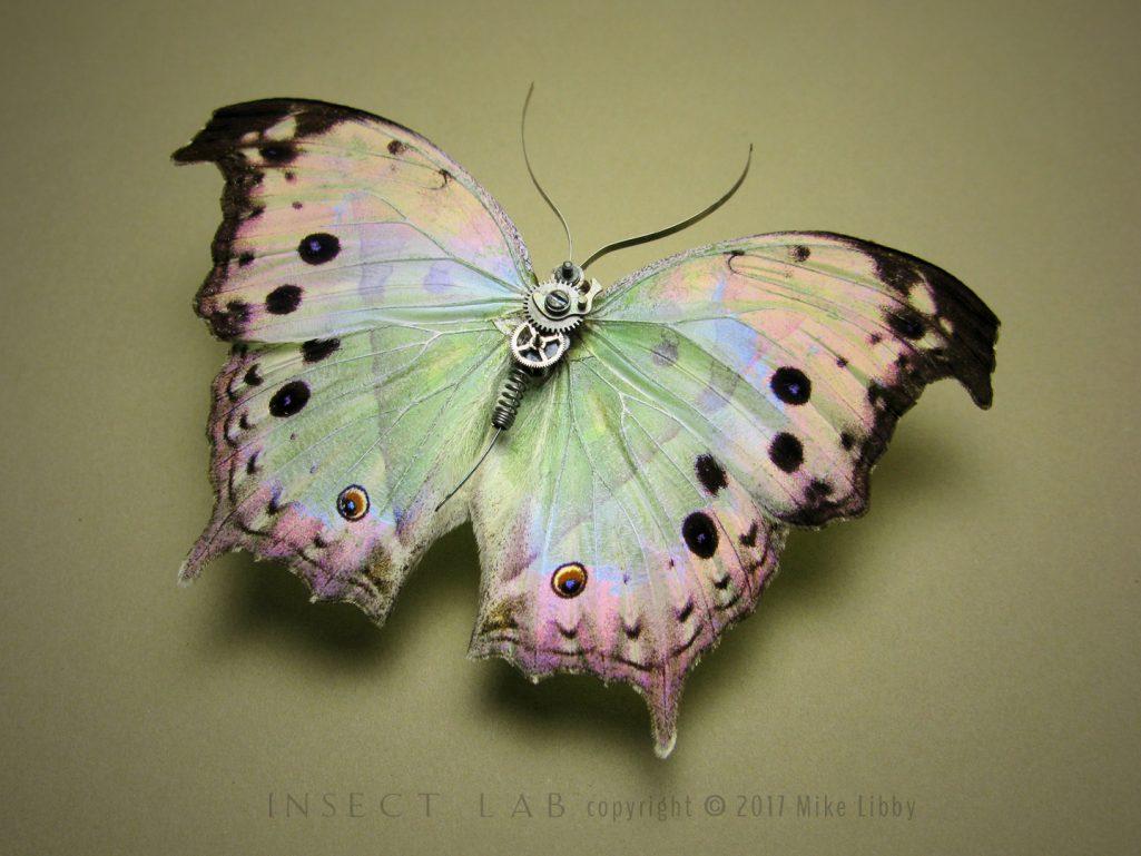 Nymphalidae1-Web2017-1025x769.jpg