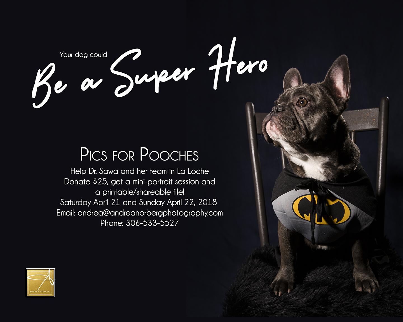Pooch Hero