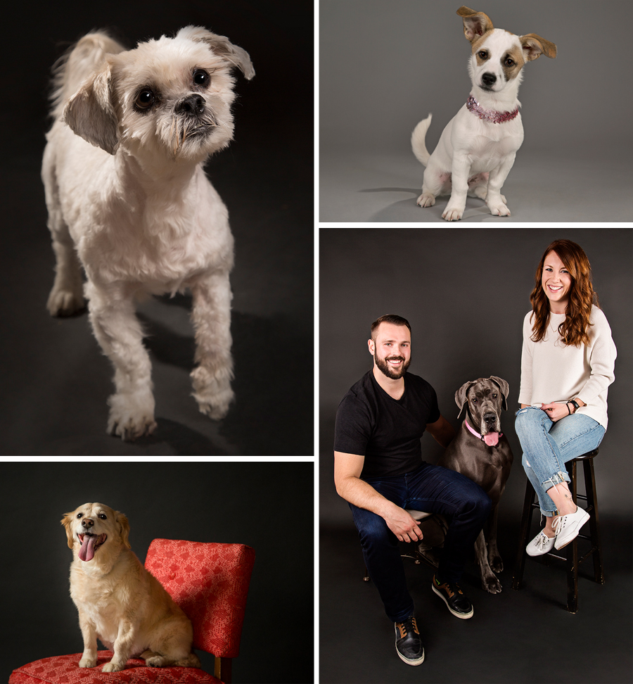 Just some of our pooch clients - Snoop, Ruby, Daisy and Stella (with Mom Michelle and Dad John)