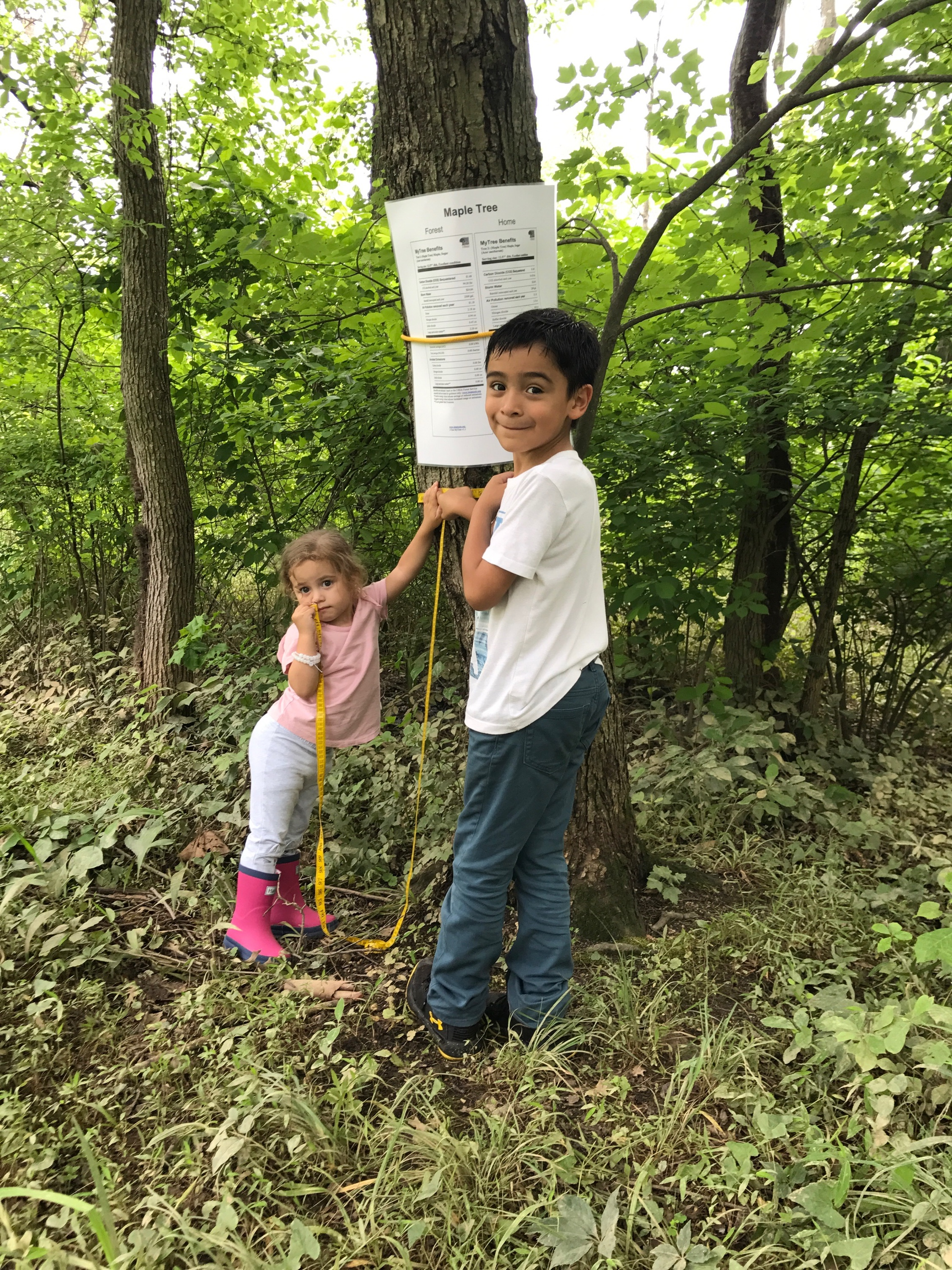 A couple of scientists-in-the-making measuring the circumference of a Sugar Maple.