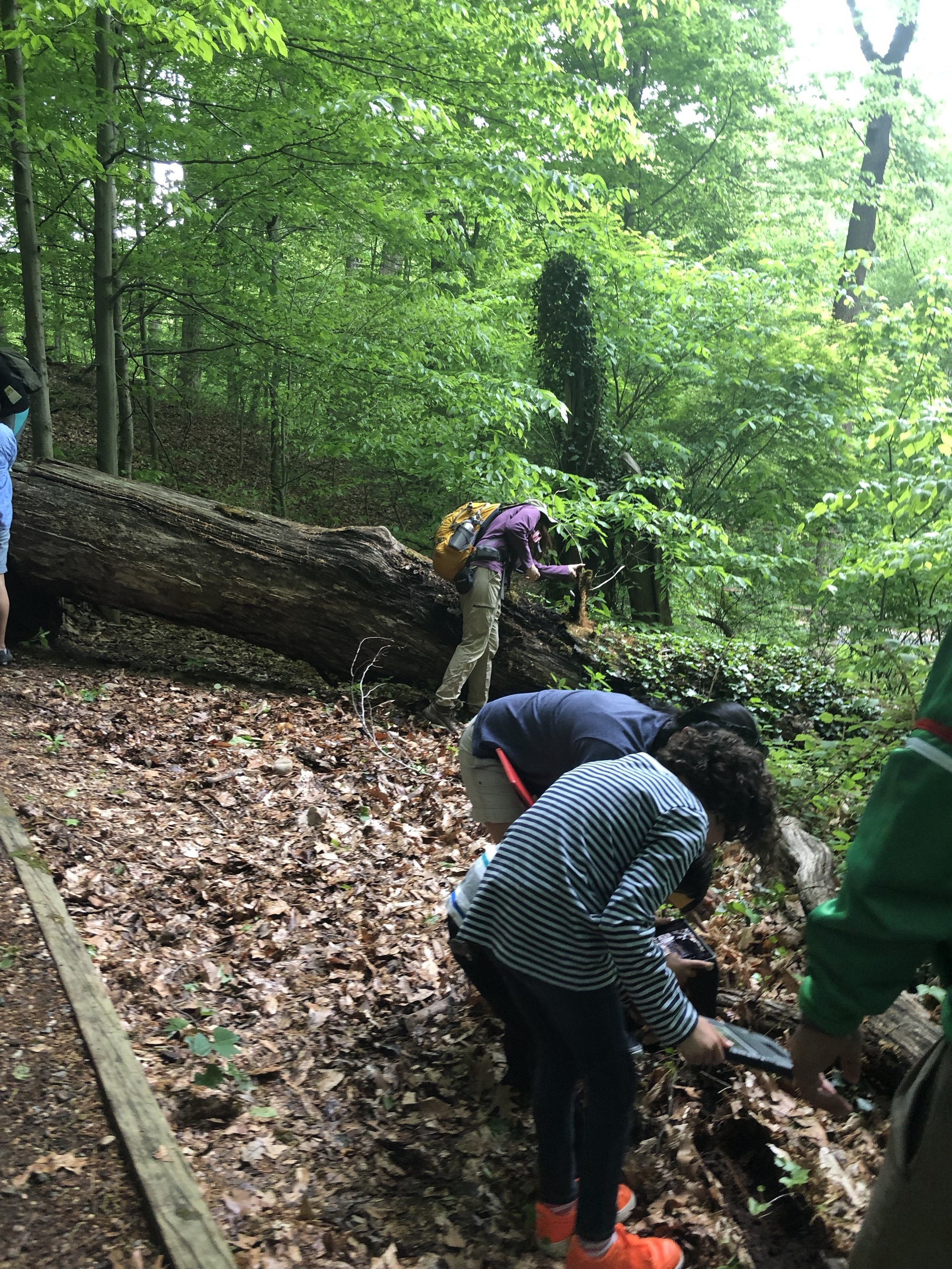 Citizen scientists exploring, documenting, and enjoying the forest.