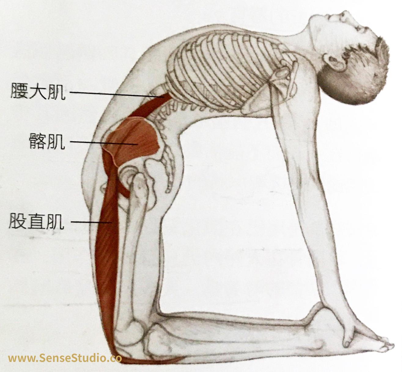 涉及肌肉:腰大肌、骼肌、股直肌