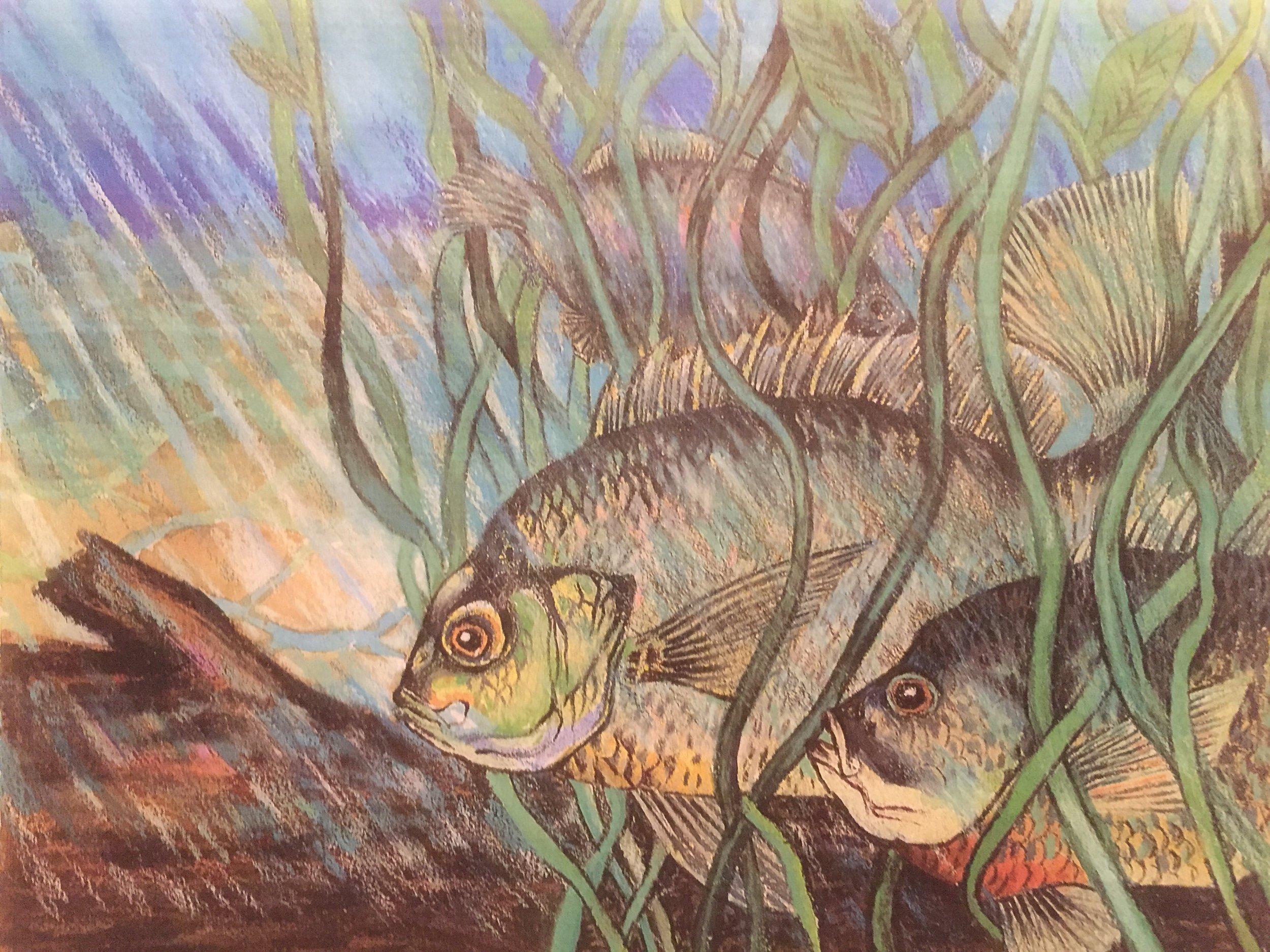 Bluegill, Colored Pencils on Watercolor